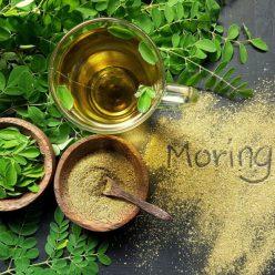 Moringa, tous les bienfaits de cette plante sur la peau, la santé, le sport