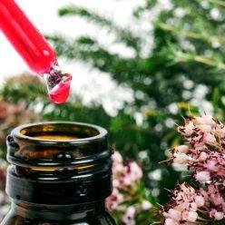 Les fleurs de bach : remèdes naturels à base de plantes pour soigner les maux de l'esprit