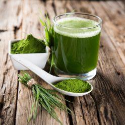 Les algues : propriétés et bienfaits cosmétiques