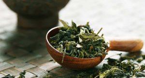 Thé vert : un actif cosmétique aux nombreuses vertus