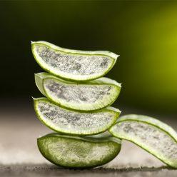 aloe vera dans les cosmétiques : hydratants et régénérants
