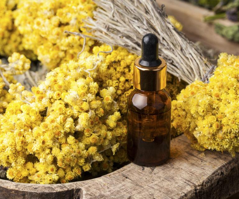 Tout savoir sur l'Immortelle ou Hélichryse, la reine des huiles essentielles