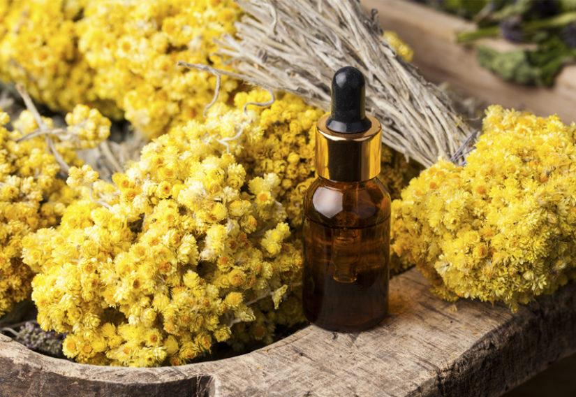 Tout savoir sur l'Immortelle ou Hélichryse, la reine des huiles essentielles | JurateBuiviene / shutterstock.com