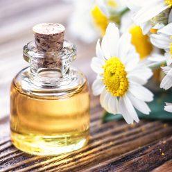L'huile essentielle de Camomille romaine : efficace pour toute la famille