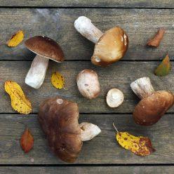 champignons : les bienfaits et propriétés santé