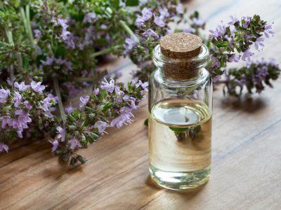 Thym à Linalol : l'huile essentielle anti parasites intestinaux