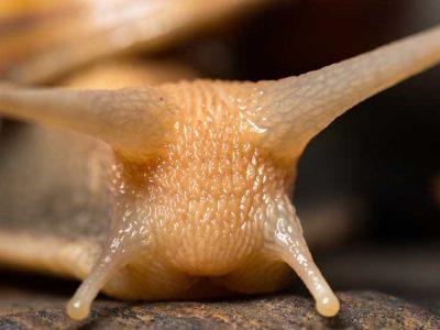 bave d'escargot soin antirides par excellence