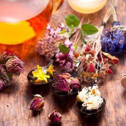 Détoxifier son foie grâce à la phytothérapie