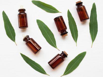 Huile essentielle d'Eucalyptus Globulus : propriétés et utilisations