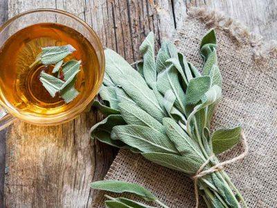 Sauge : bienfaits et utilisations de cette plante médicinale