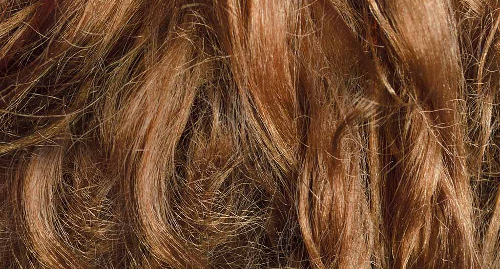 nourrir des cheveux secs