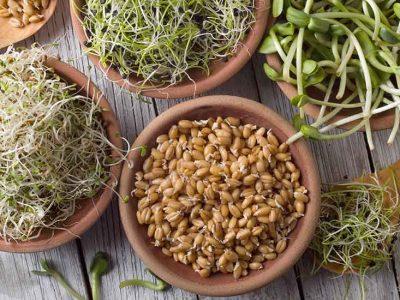 Graines germées : de nombreux bienfaits pour la santé