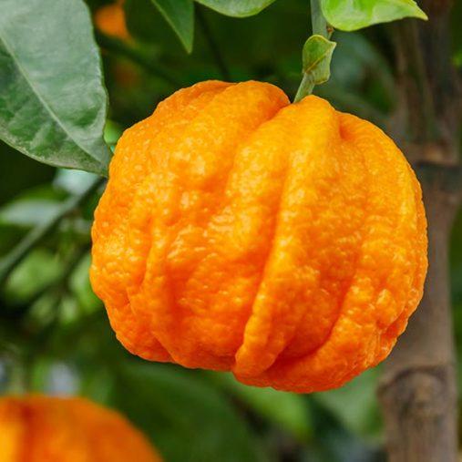 Huile essentielle d'Orange Amère : propriétés et utilisations