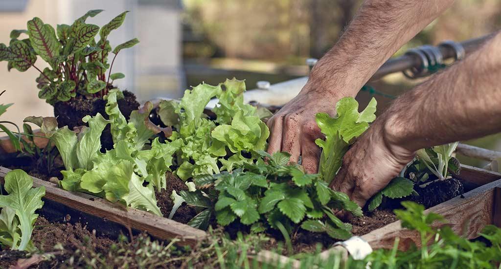 7 Plantes Repulsives Efficaces Pour Faire Fuir Les Insectes